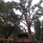 Honey Locust removal struck by Lightning crane removal