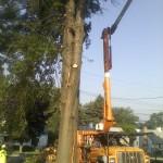 Dangerous removal large Pin Oak lightning strike  Aliquippa, Pa