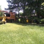 Residential: Removing Spruce trees for a family swimming pool