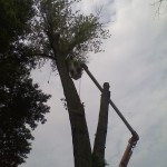 Commercial: Tree removal at Geneva College, Beaver Falls PA