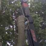 Commercial: Tree removal by crane  at Geneva College, Beaver Falls PAInstitutional tree removal